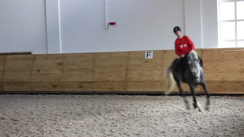 Конный клуб Rider, конь Купидон, 2014 г. Галоп, менка ноги на галопе