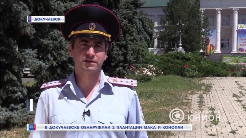 В Докучаевске обнаружили 2 плантации мака и конопли. 22.06.2019, Панорама