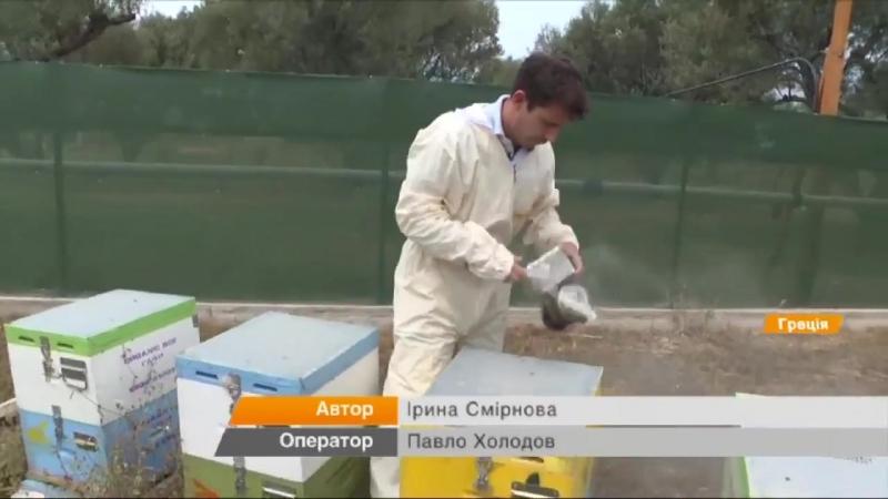Как делают мед в Греции и почему пчелам грозит массовое вымирание