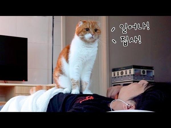 고양이와 같이 자다가 가위 눌릴뻔하다!