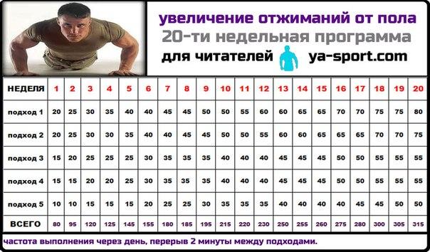 15 недельная программа отжиманий от пола.  Степной Волк. прокомментировал.  14 сентября 2012 в 19:37.
