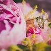 Свадебный фотограф | Фотограф на свадьбу