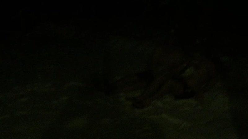 Наши моржи!Митя и Мухамед (у него в Египте снега нет) в мороз и снег после парилки!