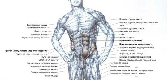 два этапа: тренировку мышц