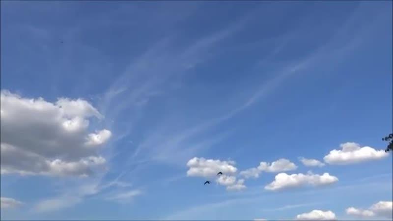 Всё небо в иудо-ядохимикатах и самолёт без химтрейлов.