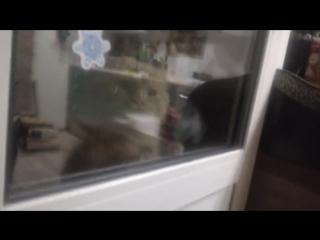 Кот просит открыть дверь
