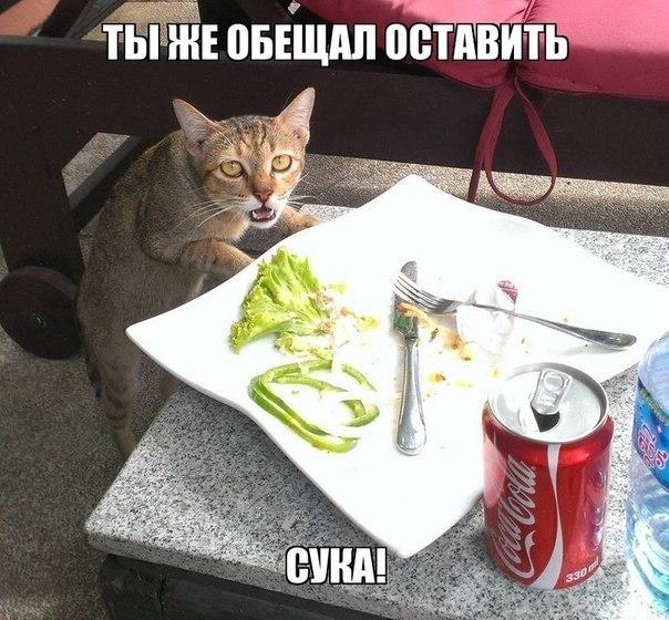 Фото №297714788 со страницы Павла Павлочева