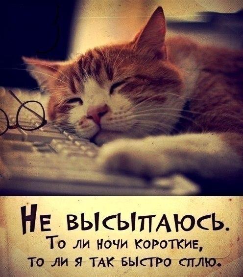 https://pp.userapi.com/c617316/v617316661/fa3d/FwyD8bT_4hE.jpg