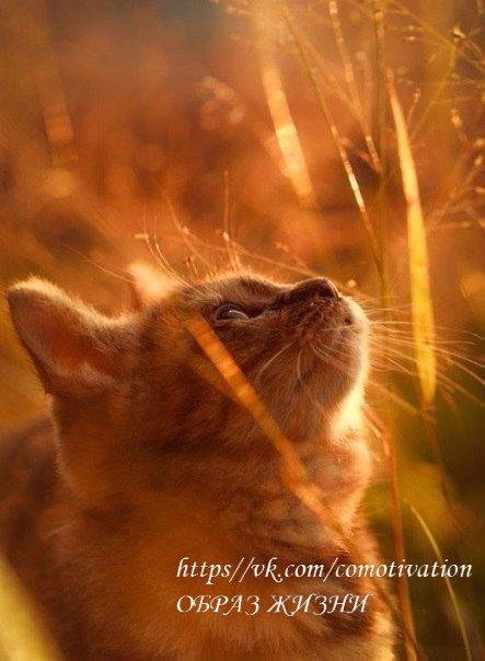 Тепло тому, кто излучает свет. Светло тому, кто носит в себе солнце.