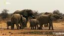 Nat Geo Wild Намибия убежище гигантов 1080р