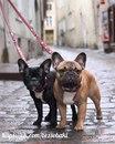 Животные знают гораздо больше, чем люди. Собаки могут заранее почувствовать землетрясение.