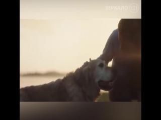 Собака покидает хозяина только один единственный раз!