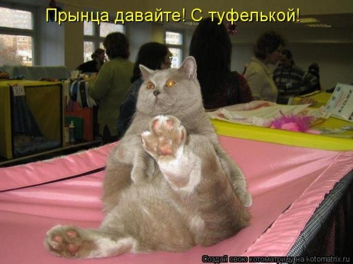 позитивчик 2 про котЭ