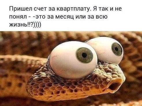 https://pp.vk.me/c543107/v543107386/4c0c0/cFO5YEEDilU.jpg
