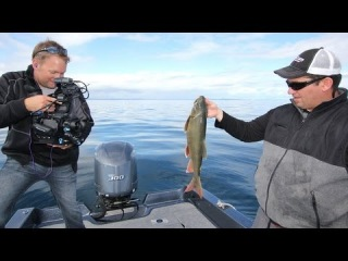 Jig Big Swimbaits for Lake Trout --