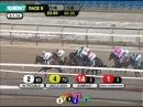 Samraat - 2014 Gotham Stakes (G2)