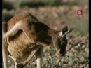 5-Мир природы - Астралия. Мы принимаем жару