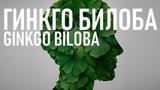 Гинкго Билоба (ОПАСНОСТЬ ПОЛЬЗА) для памяти и кровообращения Benefits of Ginkgo Biloba