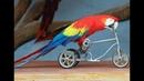Смешные Попугаи! Приколы про попугаев! Подборка! До слез!