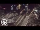 Очевидное - невероятное. Об археологических находках в Новгороде Очевидное - невероятное 1983