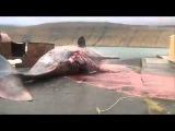кит взорвался