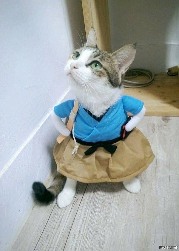 Кошка в одёжке