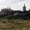 Галичина та Буковина , 26-27 жовтня