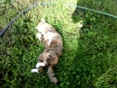 Лето-жара! Работать шило А кто полоть и окучивать будет, кошки?