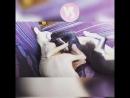 Драка сфинксов (голые кошки)
