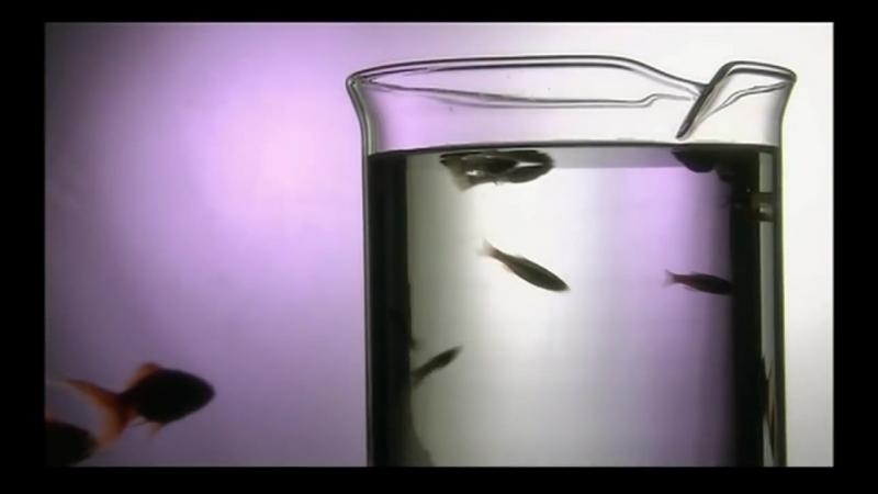 Bogatyrev Zachek | Жизнь со смыслом | Великая тайна воды (документальный фильм) (HD)