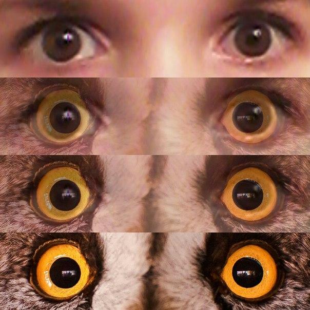 Как сделать своего глаза