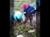 Сбор картошки после дождя в Усть Майском районе