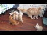 Кошка испугала котят (финал в конце)