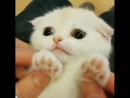 Those paws 🐾