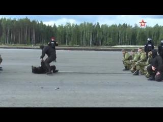 Шоу военной полиции