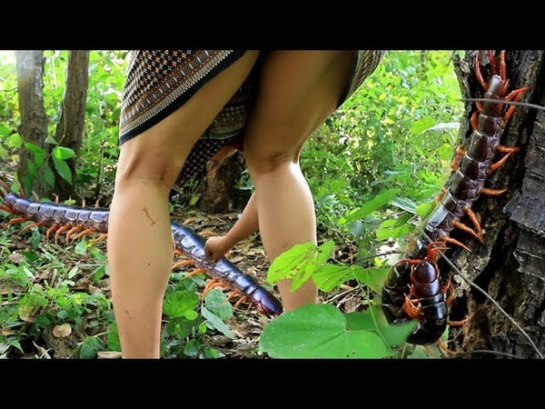Primitive Technology - Cooking Big centipede in the wild - Roast insect Eating delicious 61
