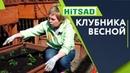 Клубника Весной 🍓Как правильно ухаживать ❓ Советы от Хитсад ТВ