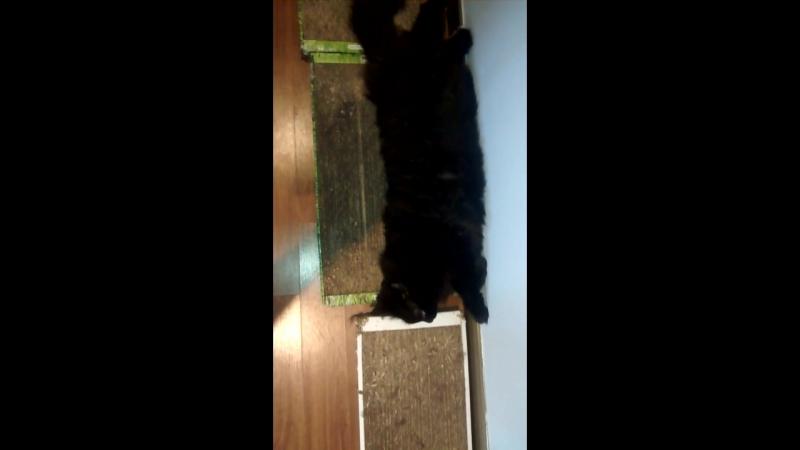 Кот Васька отдыхает