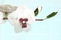 смотреть фильм дикая орхидея 3. Комнатные цветы.
