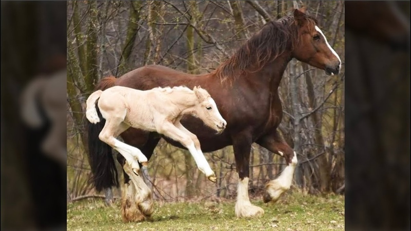 Cute And funny horse Videos Compilation cute moment of the horses - Soo Cute! 17