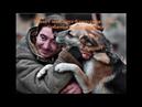 Тарзан Собака живет благодаря Elev8