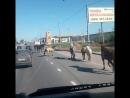 ленинградка д.есипово