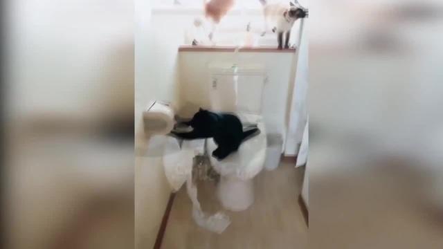 Котик сходил в туалет и нужно немножко бумаги ))