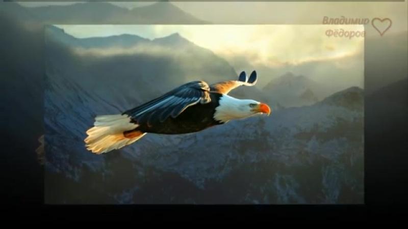 Орёл в Курятнике (Мудрая притча о предназначении человека и его самооценке).mp4