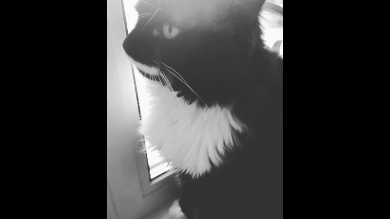 Хозяйка ругает кота.