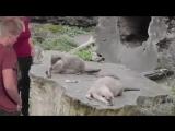 video (4)