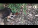 Собака кушает иргу с ветки