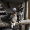 """Домики и когтеточки для кошек """"Cat-house"""""""