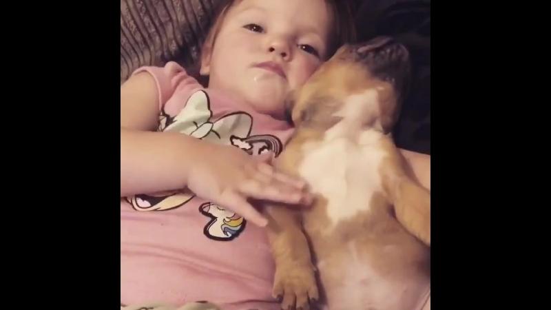 Когда очень любишь свою первую собаку