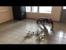 роботмода роботы аренда мероприятие евент robotmoda robots dance alpha ubtech robotmoda